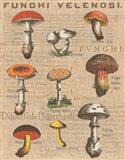 Funghi Velenosi I Art Print