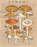 Funghi Velenosi II Art Print