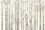 Birch Trees on White Art Print
