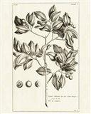 Tropical Leaf Study II Art Print