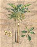 Palm Study I Art Print