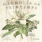 Magnolia de Printemps Art Print