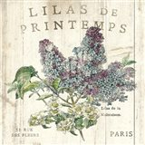 Lilas de Printemps Art Print