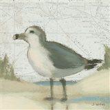 Beach Bird II Art Print