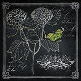 Chalkboard Botanical I Art Print
