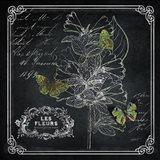 Chalkboard Botanical II Art Print