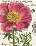 Peony Botany Art Print