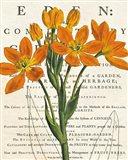 Euphorbia Botany Art Print
