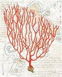 Textured Coral IV Art Print