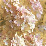 Gilded Hydrangea I Art Print