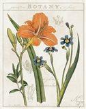 Vintage Flora II Ivory Art Print