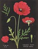 Poppy Chart Art Print