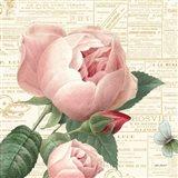 Roses in Paris V Art Print