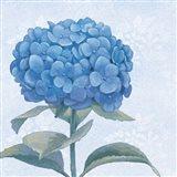 Blue Hydrangea III Crop Art Print