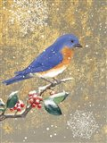 Winter Birds Bluebird Color Art Print
