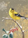 Winter Birds Goldfinch Color Art Print