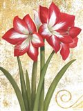 Winter Birds Amaryllis I Gold and White Art Print