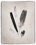 Feather Group II BW Art Print