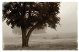 Calm Mist no Limb Art Print