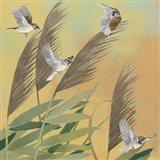 Sparrows and Phragmates Sq Art Print