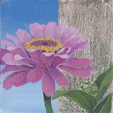Zinnia Pink Art Print