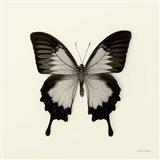 Butterfly III Art Print