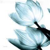 Translucent Tulips II Sq Aqua Art Print