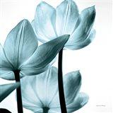 Translucent Tulips III Sq Aqua Art Print