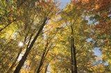 Autumn Forest III Art Print