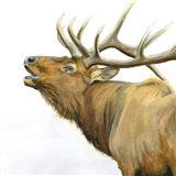 Majestic Elk Brown Crop Art Print