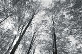 Autumn Forest III BW Art Print