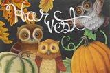 Harvest Owl IV Art Print