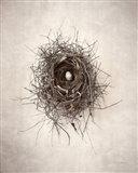 Nest I Art Print