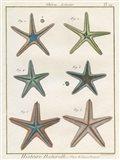 Histoire Naturelle Starfish I Art Print