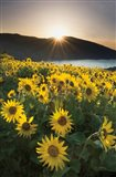 Columbia River Gorge Sunrise Art Print