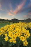 Methow Valley Wildflowers I Art Print