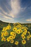 Methow Valley Wildflowers II Art Print
