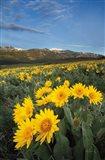 Methow Valley Wildflowers III Art Print