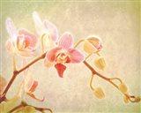 Perfume Art Print