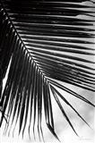 Palm Frond II Art Print