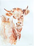 Village Cow Art Print