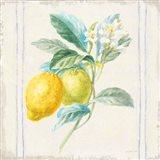 Floursack Lemons II Sq Navy Art Print