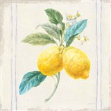 Floursack Lemons III Sq Navy Art Print
