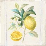 Floursack Lemons IV Sq Navy Art Print