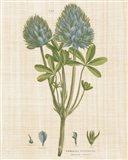 Herbal Botany XV Linen Crop Art Print