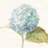 Floursack Florals V - Blue Hydrangea Crop Art Print