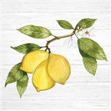 Citrus Garden I Shiplap Art Print
