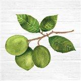 Citrus Garden II Shiplap Art Print