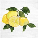 Citrus Garden VI Shiplap Art Print