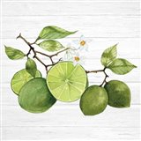 Citrus Garden VII Shiplap Art Print